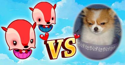 婴儿期小迷狐vs现实中的小狐狸